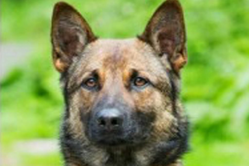 Teen jailed for dangerous driving that led to death of police dog Rebus on Colwick Loop Road