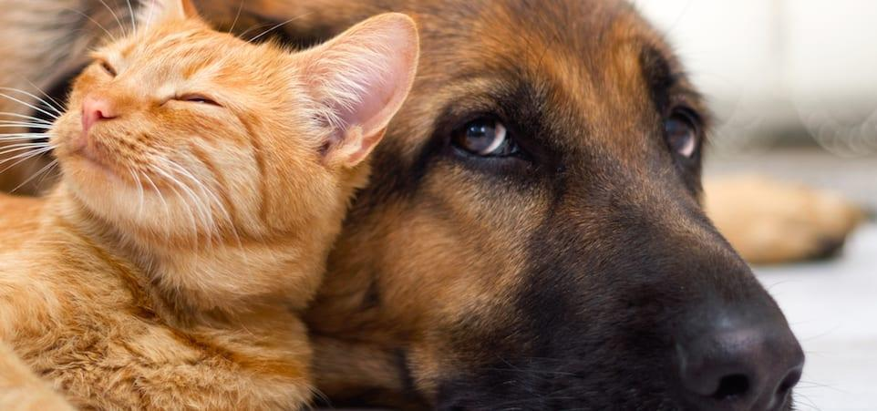 Warning to people in Gedling borough over scam pet sales online