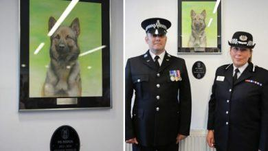 Photo of Force unveil portrait of police dog killed in action on Colwick Loop Road