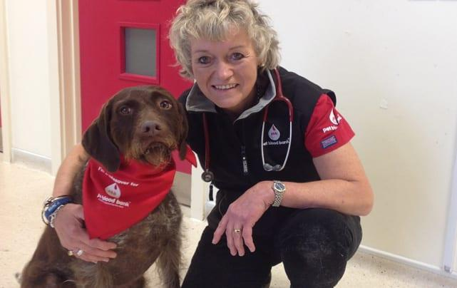 BLOODHOUNDS: Pet owners asked to back donation drive at Mapperley vets
