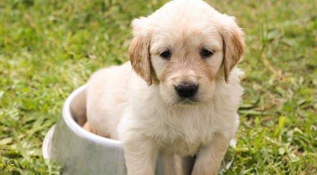Don't let illegal puppies lead you into trouble, warns council