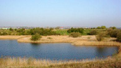 Photo of Walks to explore wildlife at Netherfield Lagoons this May and June