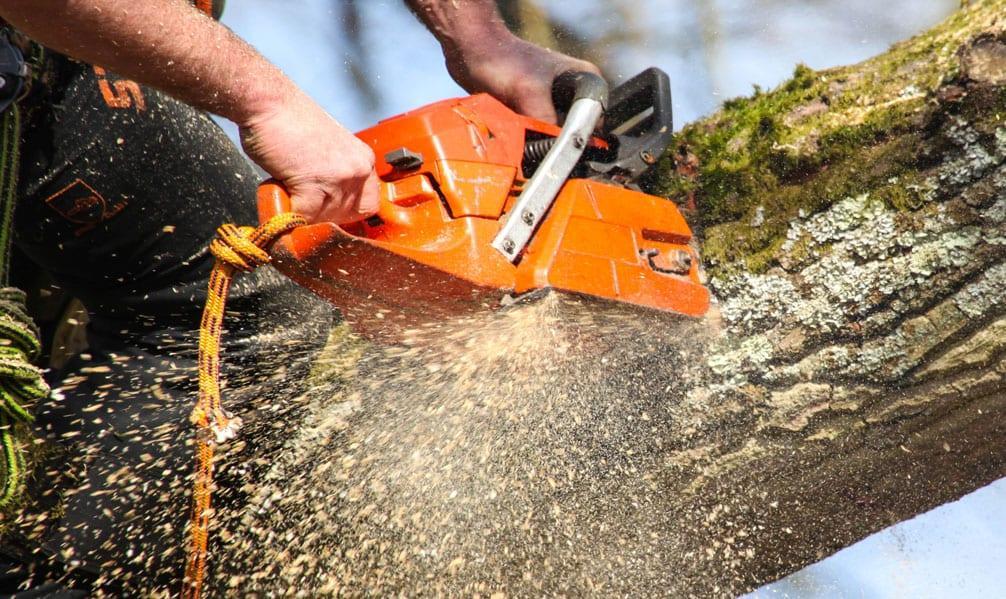 Bogus tree surgeon warning to Gedling borough residents