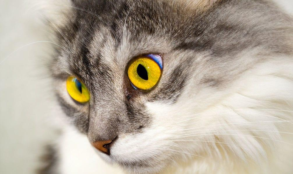 Fears of a cat killer on the loose in Netherfield