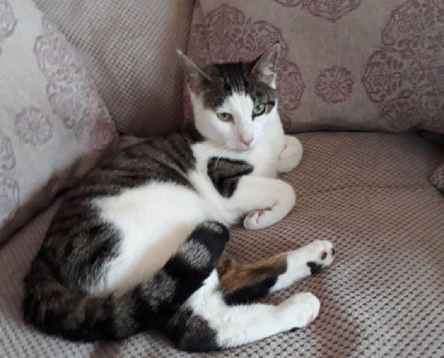 Reward offered by family to help find missing Carlton cat