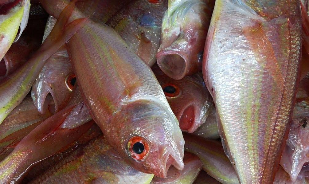 https://www.gedlingeye.co.uk/wp-content/uploads/2017/11/Fish_stock.jpg