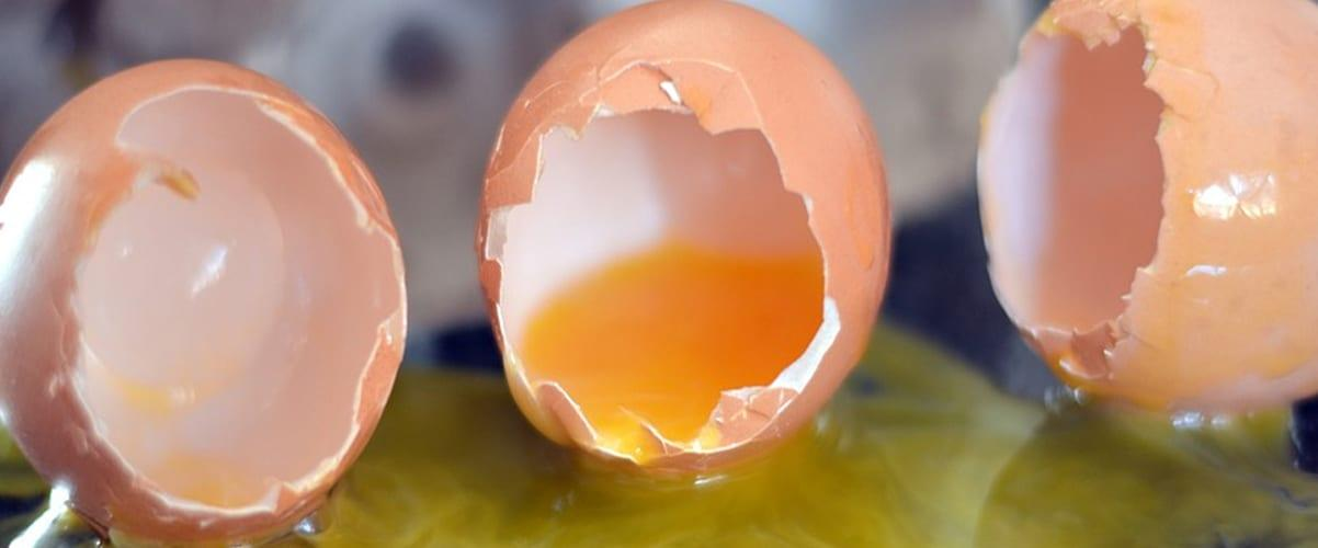 Shell-shocked: Woman calls 999 to ask what to do about broken eggs in fridge