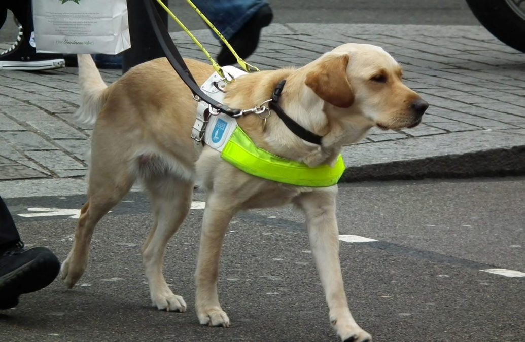 guide_dog