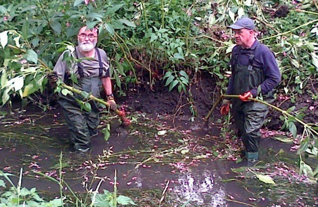 Photo of People needed for 'balsam bashing' at Netherfield Lagoons