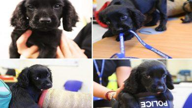Photo of Paw patrol: Meet Nottinghamshire Police's latest recruit