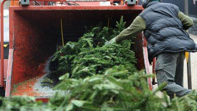 Photo of Gedling Borough Council announces Christmas tree collection service