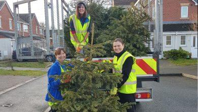 Photo of Raise money for hospice in Mapperley by recycling your tree