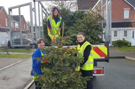 PICTURED: Volunteers from the hospice help collect trees for recycling
