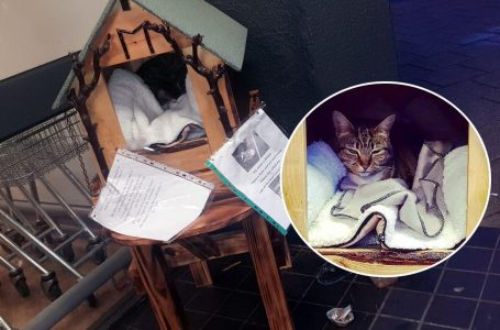 PICTURED: Minnie the cat pictured in her new shelter outside the Co-op on Victoria Road