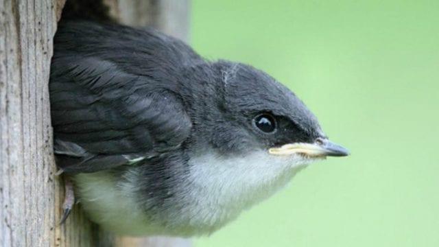 https://www.gedlingeye.co.uk/wp-content/uploads/2019/02/Bird-box-640x360.jpg