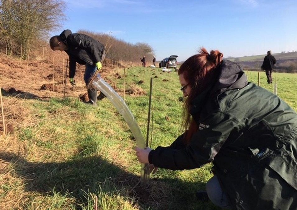 Thousands of trees planted to help reduce flood risk in Lambley and Lowdham