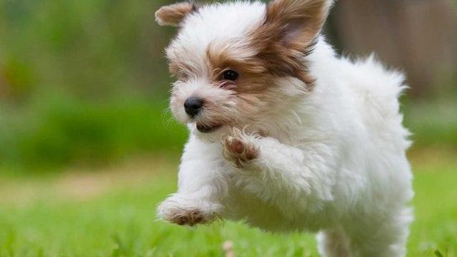 https://www.gedlingeye.co.uk/wp-content/uploads/2019/03/puppy-640x360.jpg