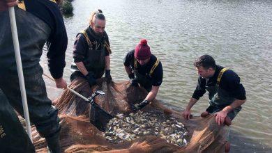Photo of Record-breaking year for Calverton fish farm