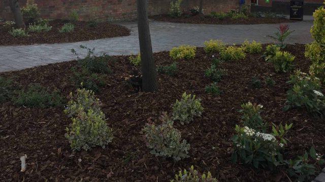 https://www.gedlingeye.co.uk/wp-content/uploads/2019/04/plants-stolen-arnold-640x360.jpg