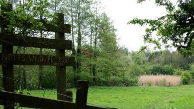 Photo of Volunteers will be needed once parish council saves nature reserve from development in Lambley