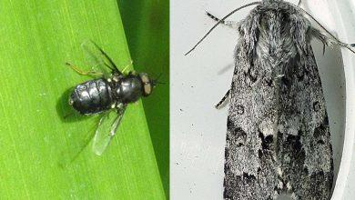 Photo of Rare insect species found at wildlife reserve in Netherfield