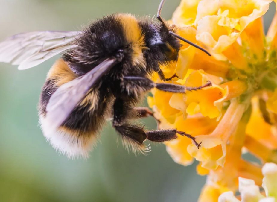 Bee-friendly road verges planned across Gedling borough