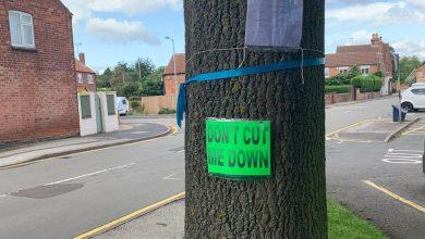 Photo of Old tree spared the axe as revised crossing plans for Calverton get green light