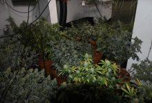 Photo of Over 100 cannabis plants seized from flat in Mapperley