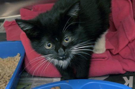 RSPCA voice fears over 'kitten boom'