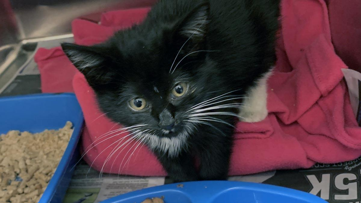 RSPCA voice fears over 'kitten boom'