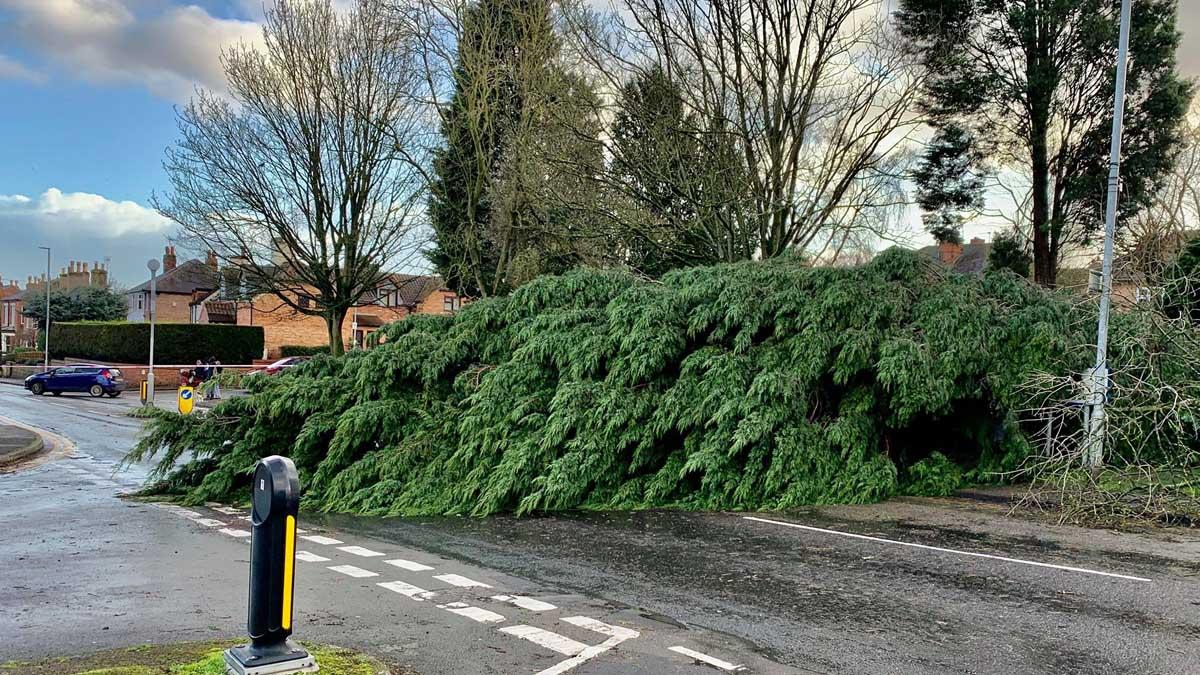 Storm Ciara: Fallen trees close roads and railways as borough is battered by high-speed winds