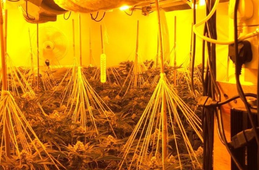 Cannabis plants seized during raid on property in Calverton