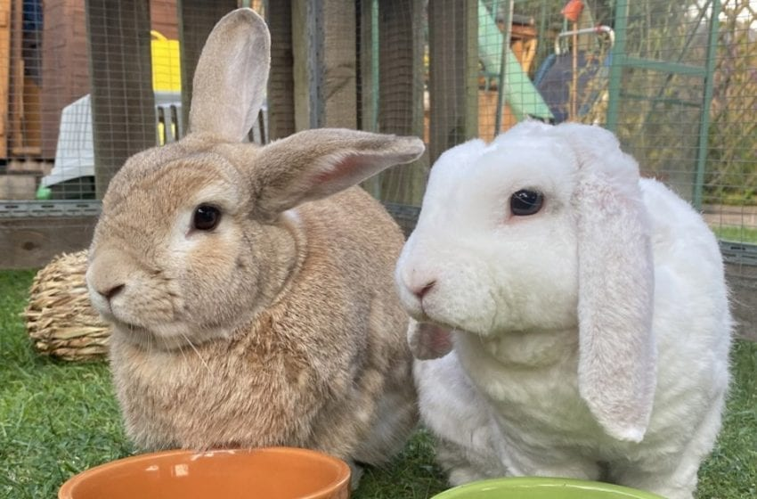 'Hoppy ending': Rabbit left for dead by fly-tippers finds new home with family in Arnold