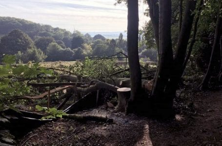 PICTURED: Felled trees in Gedling House Woods (IMAGE: Facebook/Michelle Gale)