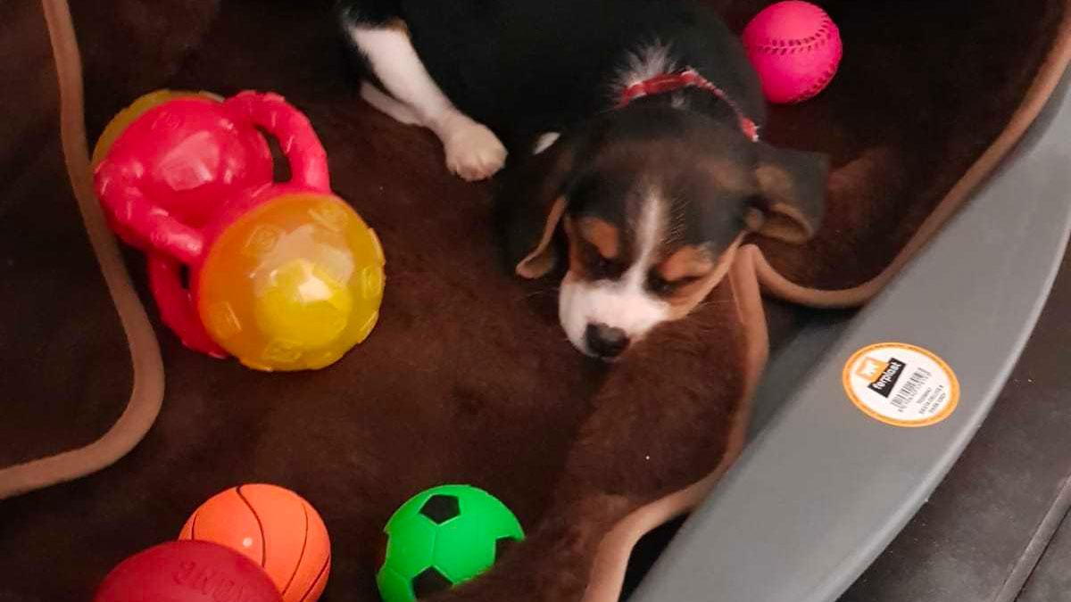 Illegal puppy