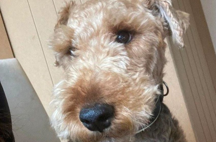 Builder from Carlton who had van stolen while beloved dog was inside is 'over the moon' to have him home.