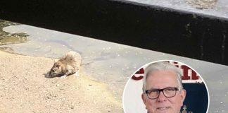 Councillor John Clarke rat