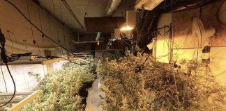 Cannabis factor Mapperley